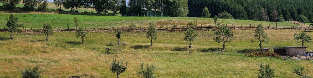 Trees 4419375 1920